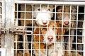 Perros-de-rehala-villadiego-febrero-2020-c.jpg