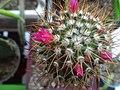 Persian cactus.jpg