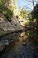 Pescadero Creek - Ручей в лесу - panoramio.jpg