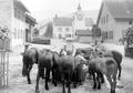 Pferde bei der Tränke am Dorfbrunnen - CH-BAR - 3238652.tif