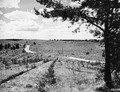 Photograph of Plantation Number 45B in Washburn Ranger District - NARA - 2129287.tif