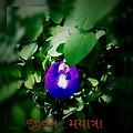 Photox 2431013.jpg