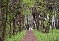 Pidgirtsivsky Park DSC 4980 46-253-5008.JPG