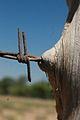 PikiWiki Israel 15283 Ingrowing barbed-wire.jpg