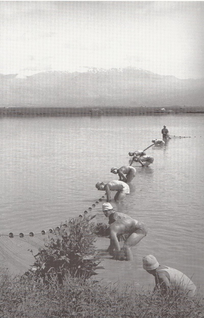 בריכות דגים בכפר בלום
