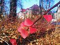 Plac Spiski Poznan autumn.jpg