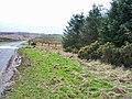 Plantation and moorland, Tow Law to Cornsay road - geograph.org.uk - 146576.jpg