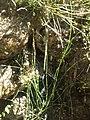Plants (1)13.JPG