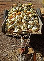 Plethora of Pumpkins 10-14 (15518407645).jpg