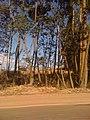 Poços de Caldas - MG - panoramio.jpg