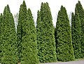 Poland. Warsaw. Powsin. Botanical Garden 097.jpg