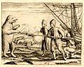 Polar bear, Gerrit de Veer (1596).jpg