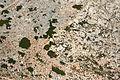Pollença - Ma-2210 - Cap de Formentor - Ephedra fragilis 10 ies.jpg