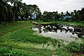 Pond - Bardhaman Science Centre - Bardhaman 2015-07-24 1529.JPG