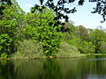 Pond at the arboretum 01.JPG