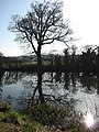 Pond reflections - geograph.org.uk - 687259.jpg