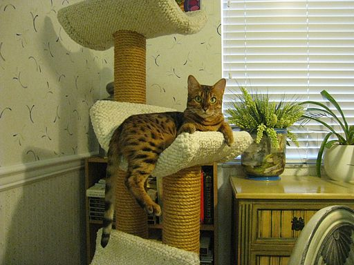 Posh in cat condo