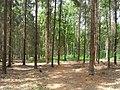 Prague Kunraticky Forest Centr4.jpg