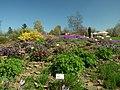 Praha, Troja, Botanická zahrada, koniklce a dalí květiny.JPG