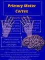 Primary Motor Cortex Infographic.pdf