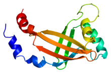 Protein CBFB PDB 1cl3.png