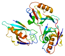Protein DVL3 PDB 1l6o.png