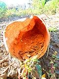 Pumpkin seeds 2.JPG