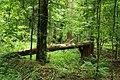 Puszcza białowieska fragmenty rezerwatu ścisłego a14.JPG