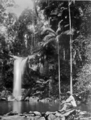 Queensland State Archives 1103 Curtis Falls Tambourine Mountain c 1931.png