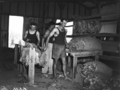 Queensland State Archives 1844 Tobacco curing Ayr November 1955.png
