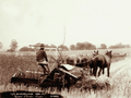 Queensland State Archives 2378 Reaper and binder at Yangan 1899.png