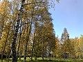 Rabochiy Poselok, Kubinka, Moskovskaya oblast', Russia - panoramio (4).jpg