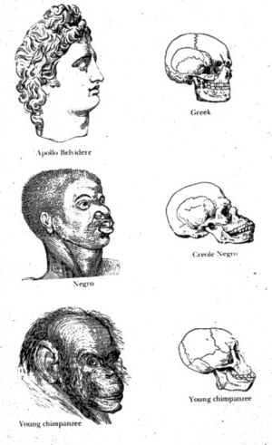 "Scientific racism - Illustration from Indigenous Races of the Earth (1857), whose authors Josiah Clark Nott and George Robins Gliddon implied that ""Negroes"" were a creational rank between ""Greeks"" and chimpanzees."