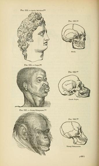 Races and skulls