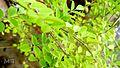 Random leafs edit.jpg
