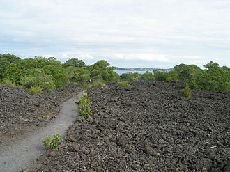 Rangitoto Island - Lava field with path and encroaching vegetation.