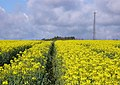 Rape Field - geograph.org.uk - 759058.jpg