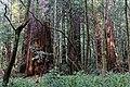 Redwood Creek Valley 25.jpg