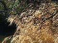 ReedsHildenMarch 01.JPG