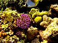 Reef2183 - Flickr - NOAA Photo Library.jpg