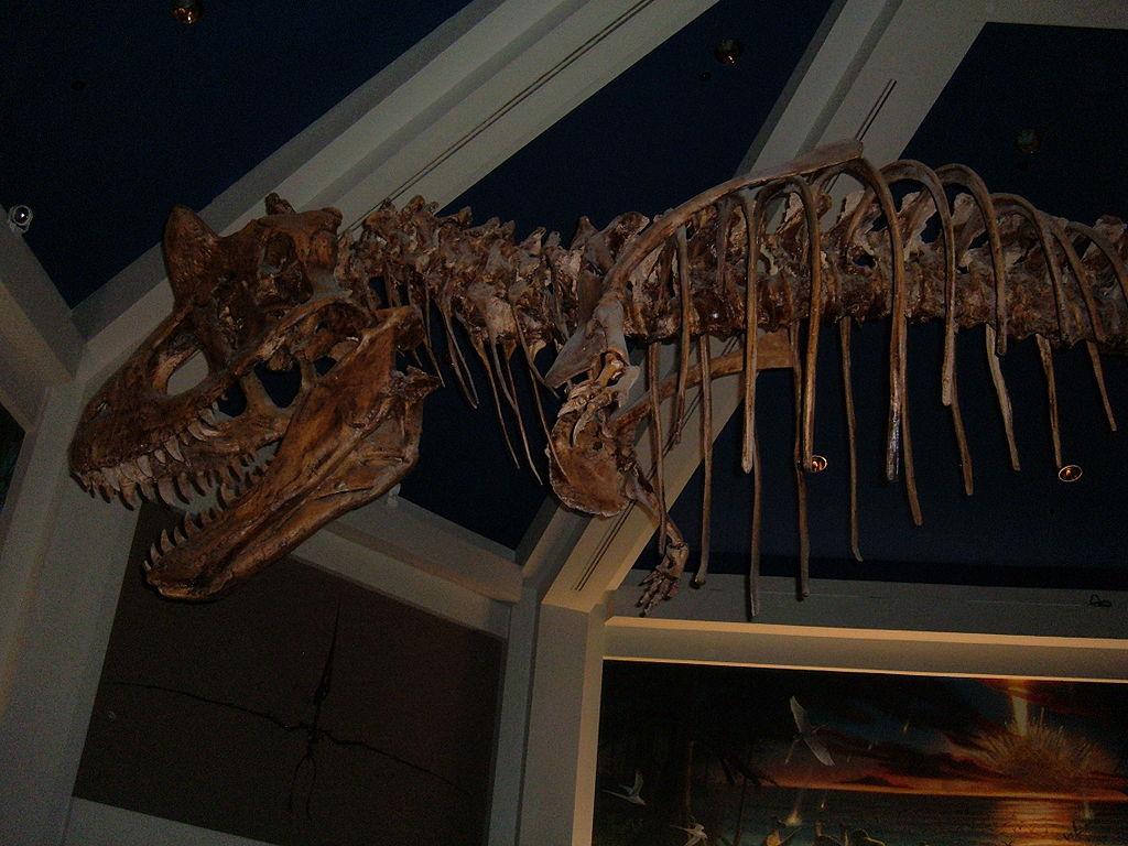 File replica carnotaurus skeleton dinosaur 1 jpg wikimedia commons