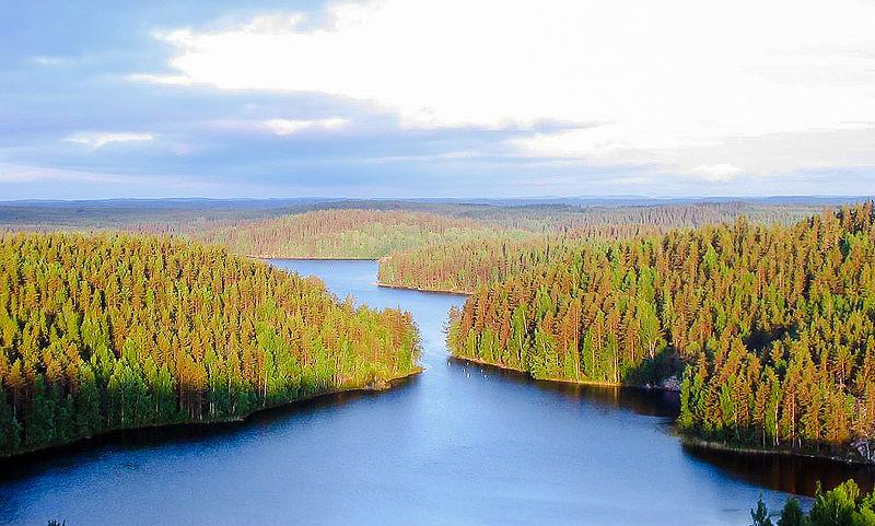 File:Repoveden Kansallispuisto Kesayonauringossa.jpg
