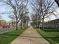 Republic offices in Columbus, trees along sidewalk.jpg