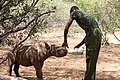 Rhino Caretaker feeding a baby rhino at a sanctuary.jpg