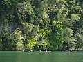 Rio dulce2 (26) sm (4290055000).jpg