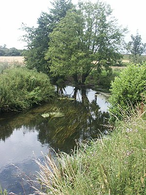 River Tas - The river at Caistor St. Edmund