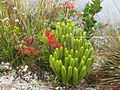 Roraima plant10.jpg