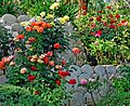 Rose Garden, Redlands, CA 2015 (20521178915).jpg
