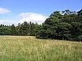 Rough grazing near White House - geograph.org.uk - 542560.jpg