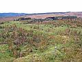 Ruin at Low Bellshiel - geograph.org.uk - 655764.jpg